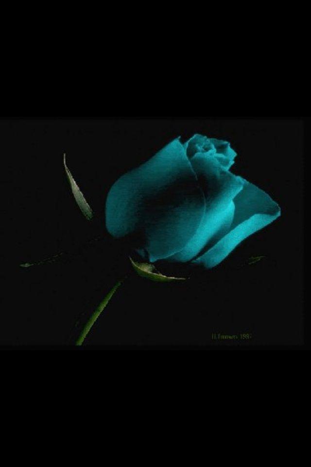 Epingle Par Alex Morgan Sur Couleur Turquoise Fond D Ecran Colore La Vie En Couleur Couleur Turquoise