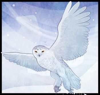how to draw a snowy owl step by step birds animals free online