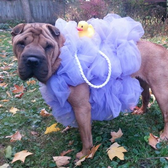 Diy Loofah Dog Costume Pet Halloween Costumes Cute Dog Costumes
