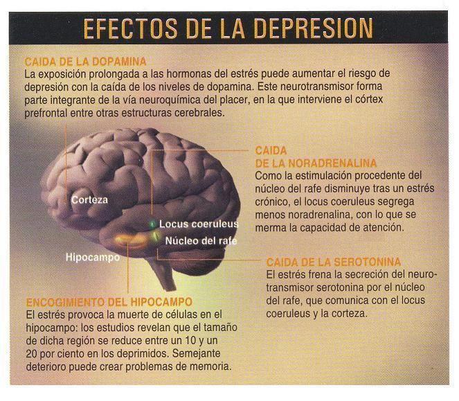 Como crear mas serotonina