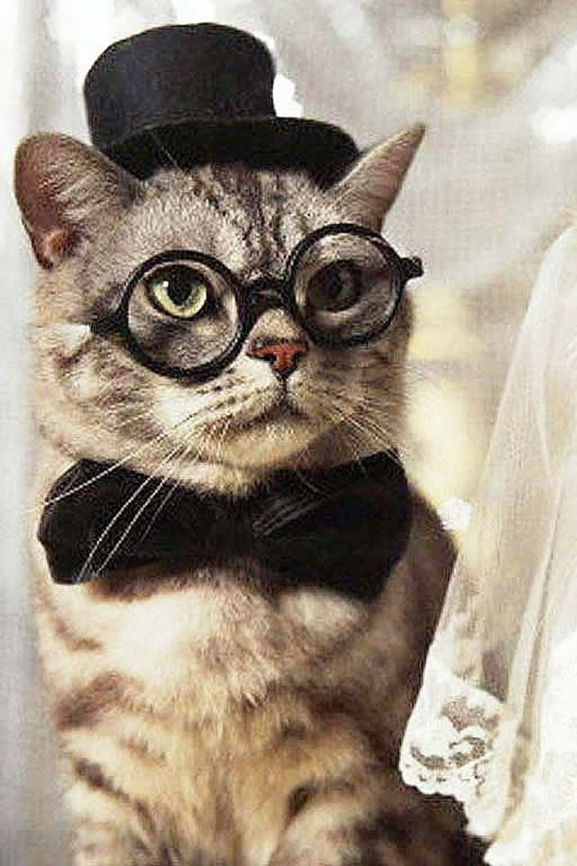 Cat With Glasses Wallpaper 640x960 Hd Wallpapers For Iphone 4s Cat Glasses Cats Cool Cats Cat wearing glasses wallpaper hd