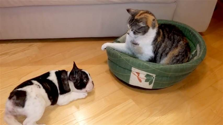 This Puppy Wants His Bed Back Sneaky Cat Puppies French