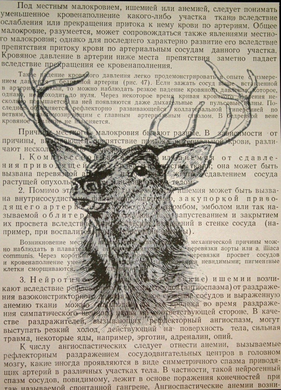 deer print on vintage russian book page 5 x 7 deer head print 1000 - Book Page Print