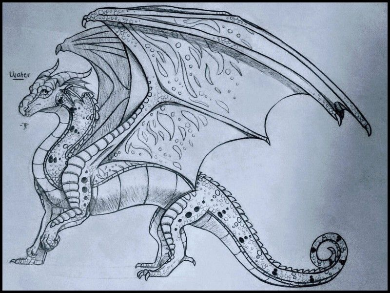 New Pencil Drawings Of Wings With Images Dragon Drawings In