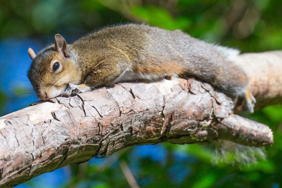 10k professional in 2020 squirrel get rid of squirrels