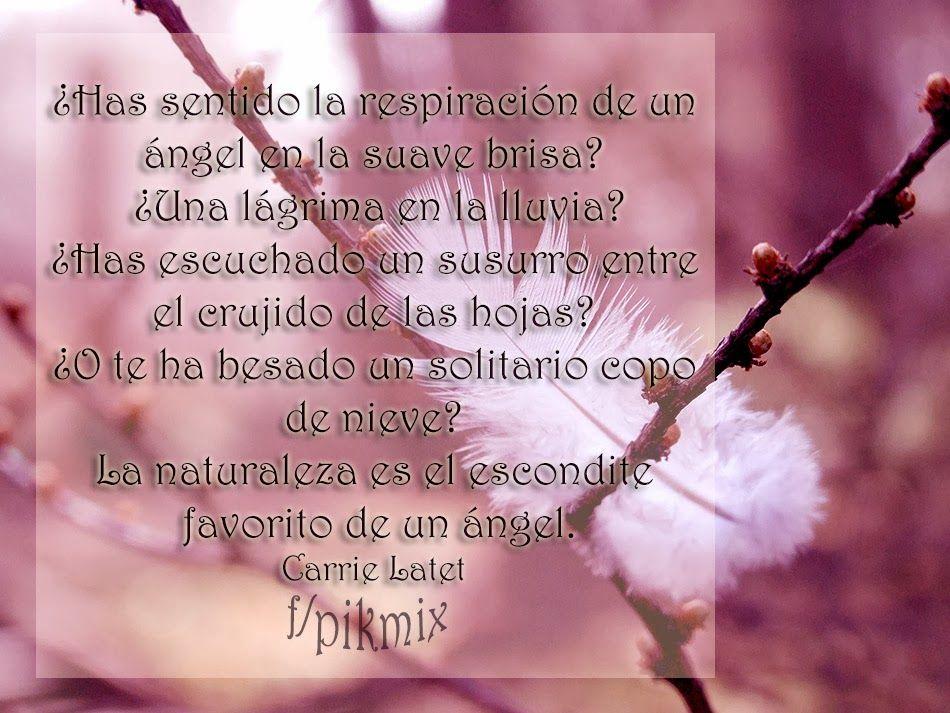 El Escondite De Un Angel Frases Pluma Rama Tarjetitas