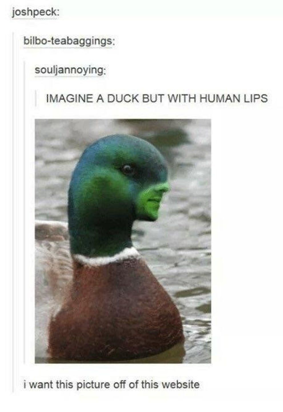 17 Disturbing Tumblr Posts That I Can T Unsee And Now You Can T Unsee Either Tumblr Funny Stupid Memes Tumblr Posts