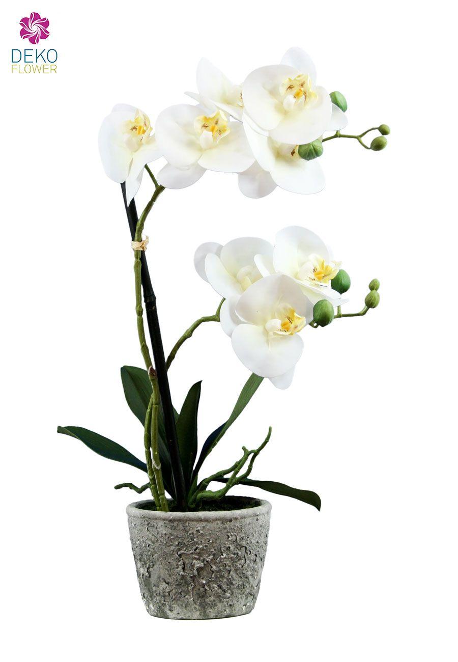 k nstliche orchidee creme wei im steintopf 50cm. Black Bedroom Furniture Sets. Home Design Ideas