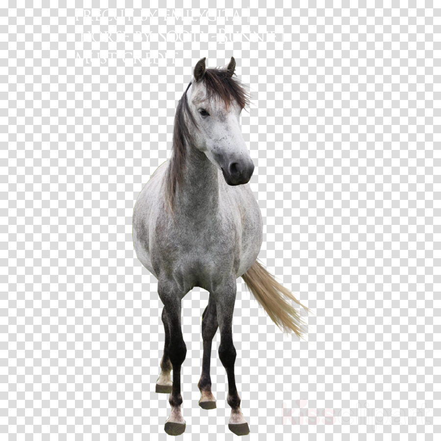 Grey Horse Png Clipart Mustang Arabian Horse Andalusian Horse Horse Cartoon Horses Grey Horse