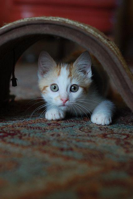 alert #kittens