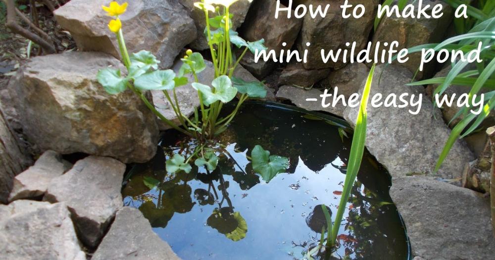 How to make a mini wildlife pond - the easy way | Mini ...