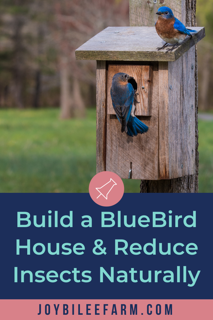 Build a BlueBird House and Reduce Insect Pests In Your Garden the Lazy Way Joybilee Farm DIY Herbs Gardening
