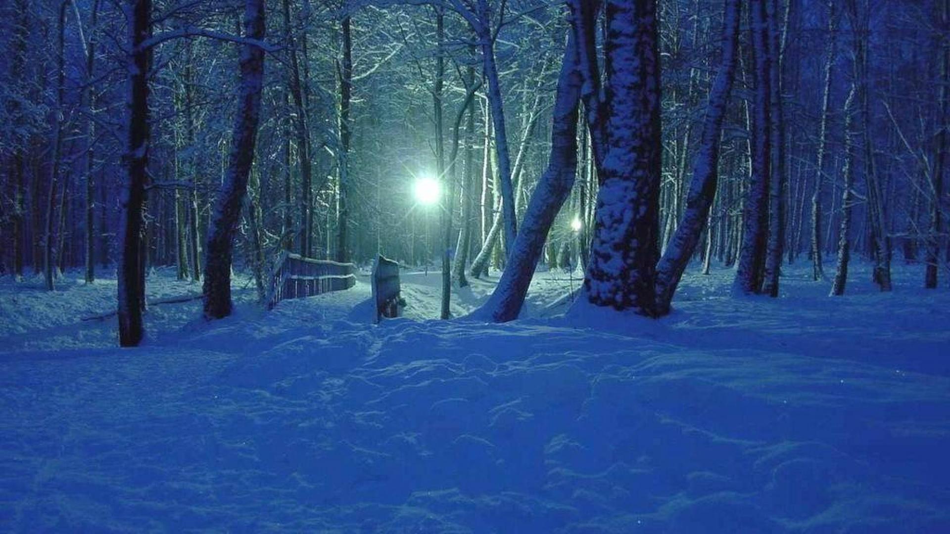 Winter Night Hd Desktop Background wallpapers HD free - 497448 | Night  landscape, Winter forest, Dark forest