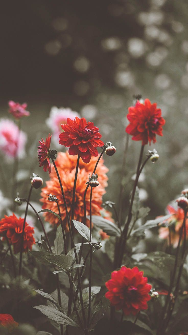 Photo of Wildflower iPhone Xs Wallpaper Collection av Preppy Wallpapers #iphone #iphonexs …