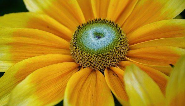 Flor, Amarillo, Naturaleza, Planta