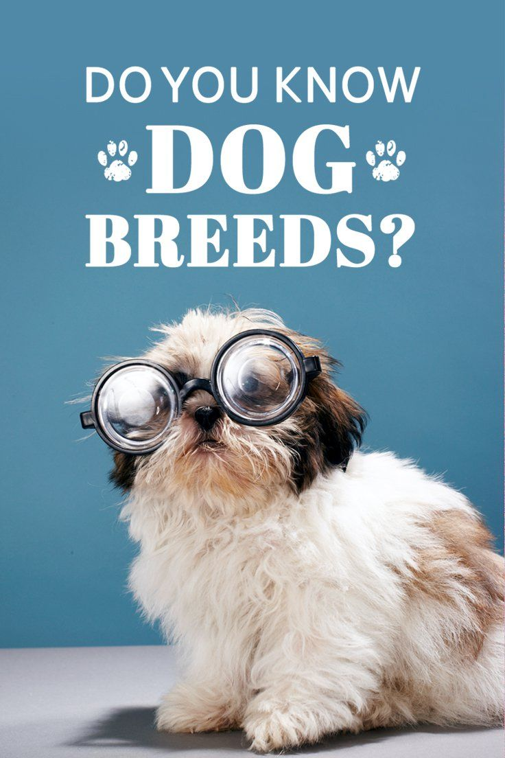 Can You Guess the Dog Breed Using One Cute Puppy Picture