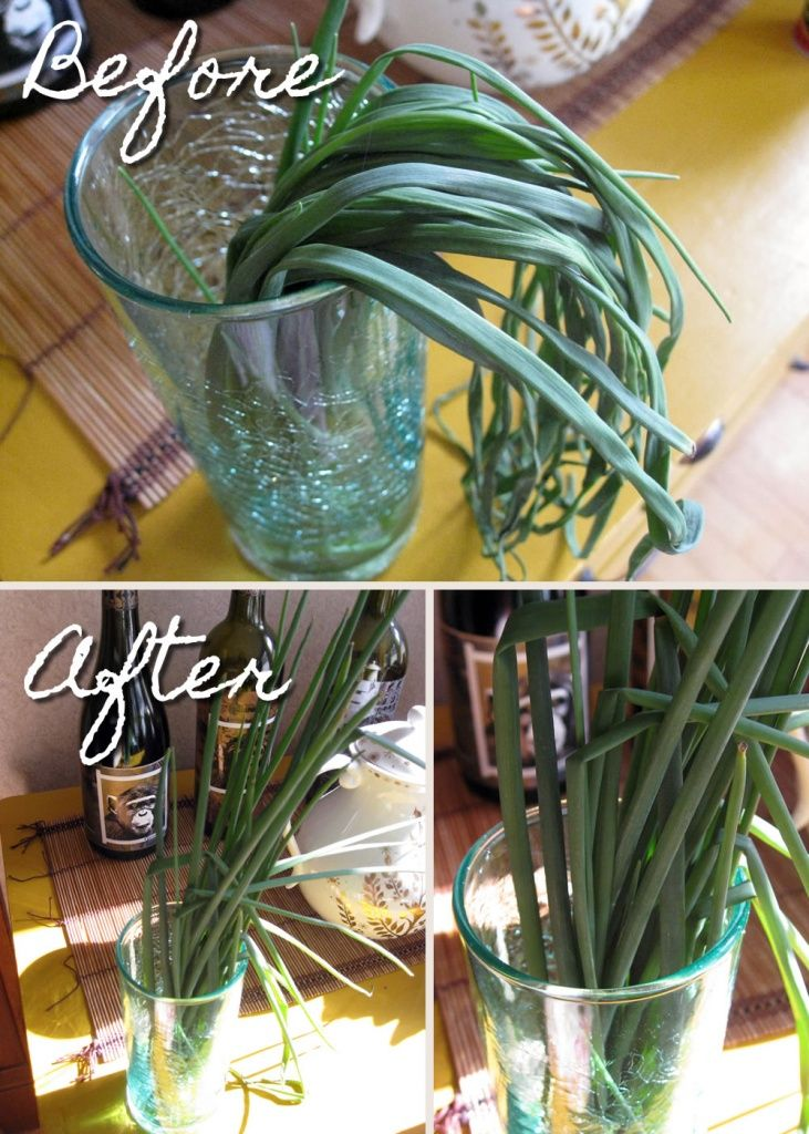 how to store fresh cut chives