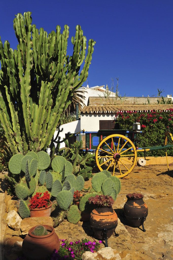 Incroyable Adding Some Western Elements To Your Cactus Garden Can Drive Home That  Desert Look. A