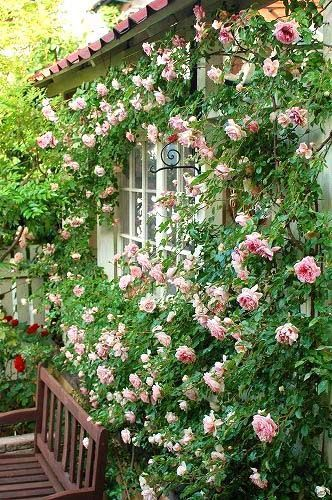 Cottage garden climbing roses layout