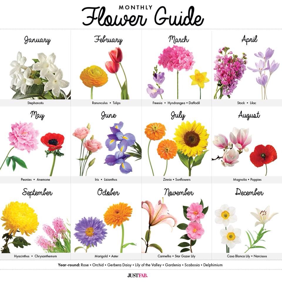 Pin By Lala S Updos On Flowers Birth Month