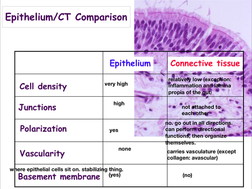 how to tell what connective tissue it is table