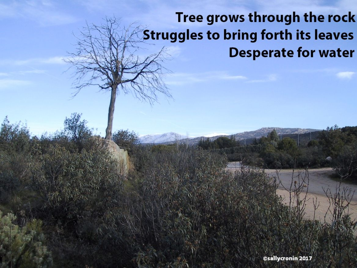Weekly Image and Haiku Desperate for Water by Sally