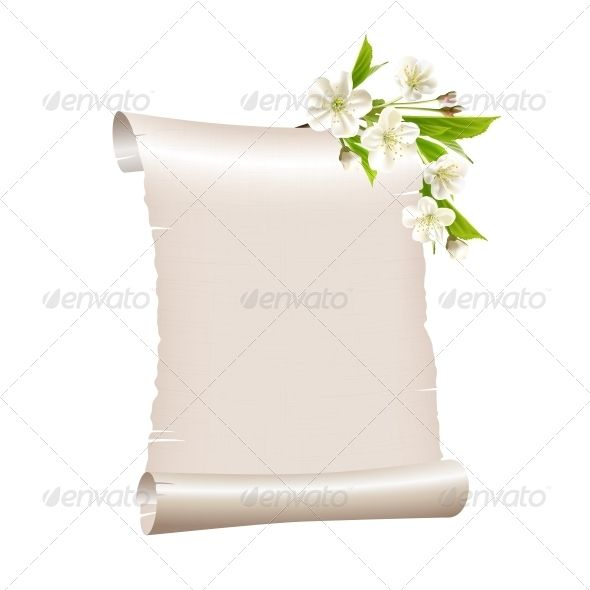 Scroll Blank Paper with Blossoming Cherry Branch Cherries, Font - blank paper background