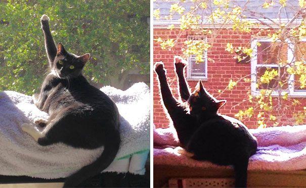 31-1 Katter soldyrkare13