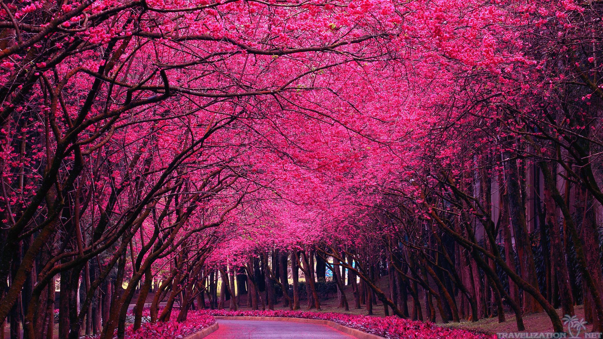 Pink Spring Trees Hd Images 3 Hd Wallpapers Hdimges Com Beautiful Photography Nature Flower Background Images Pink Trees