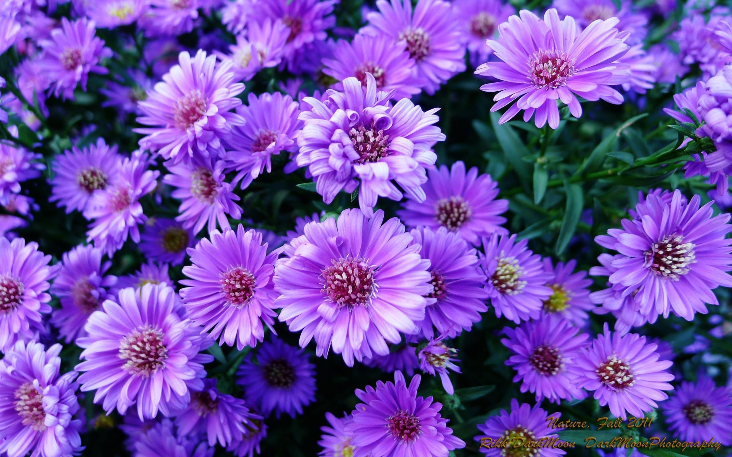 34 Different Types of Purple Flowers for Your Garden