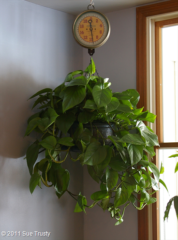 Easy to grow house plants. I also love the idea of planting in a ...