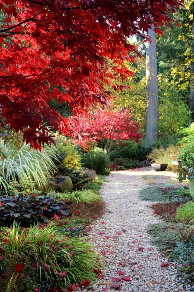 Erable Du Japon Petit Érable du japon dans le jardin en 55 idées d'aménagement