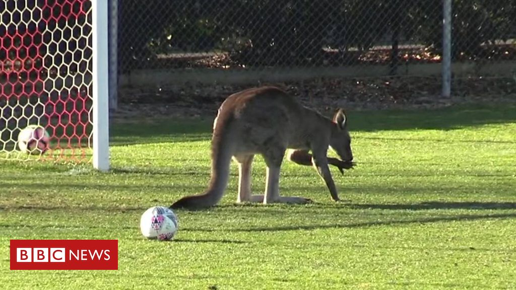 Kangaroo halts Australia football game Australie