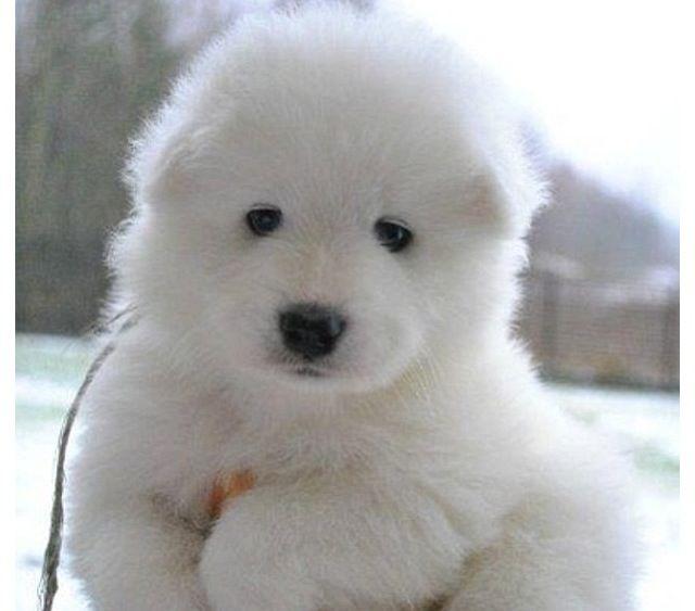 Cool Teddy Bear Chubby Adorable Dog - 169437a8d5252d1c19b714fb6585047f  Collection_766535  .jpg