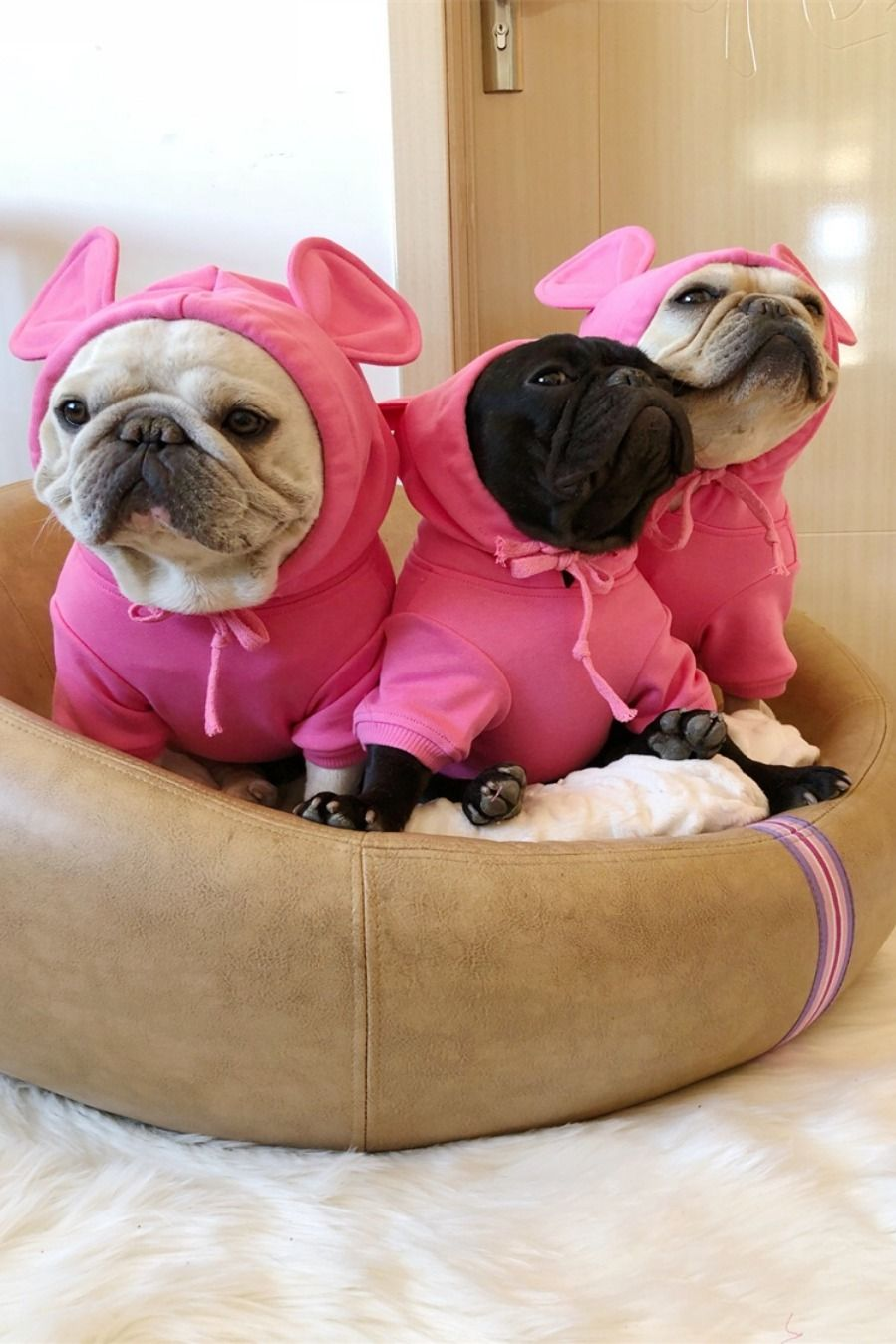 Down coat hoodies for french bulldog french bulldog