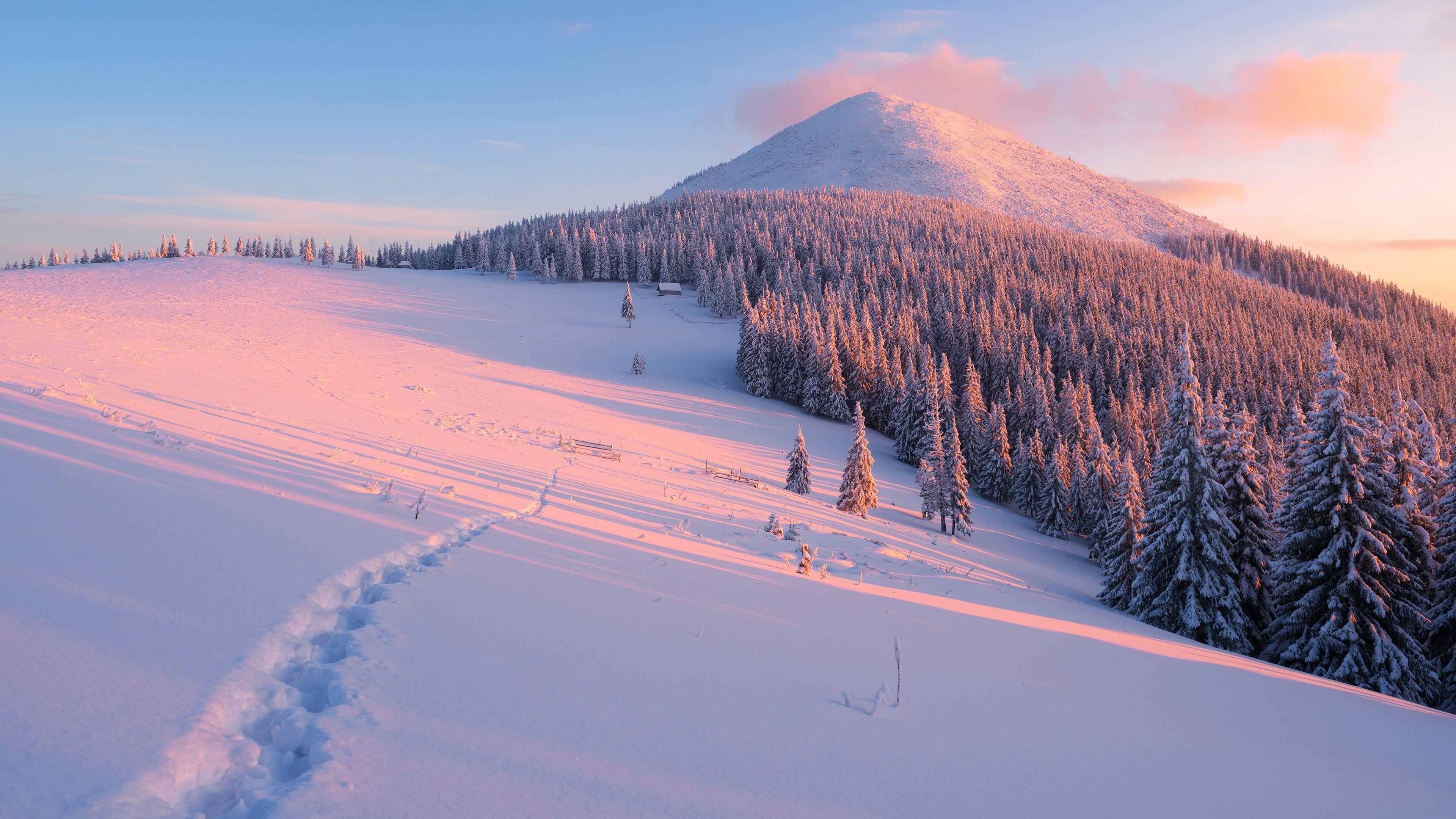Célèbre Hiver, pente, arbres, neige, montagnes, rayons du soleil Fonds d  LM73