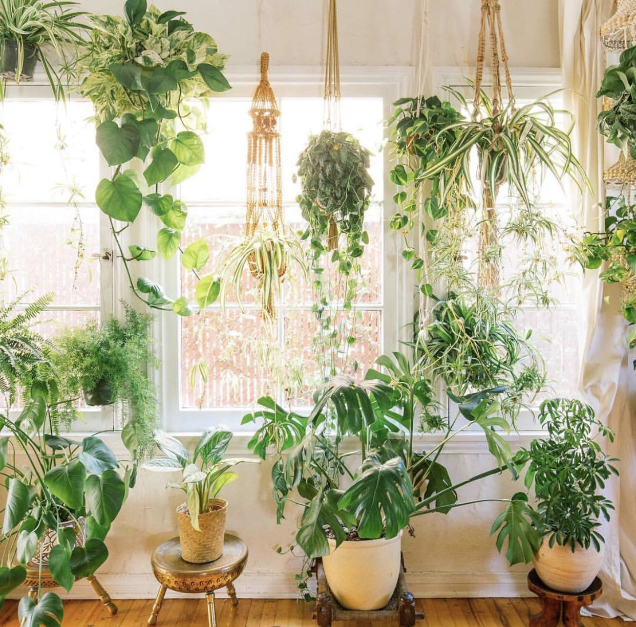 Dream window  Plant decor indoor, Houseplants, Plants