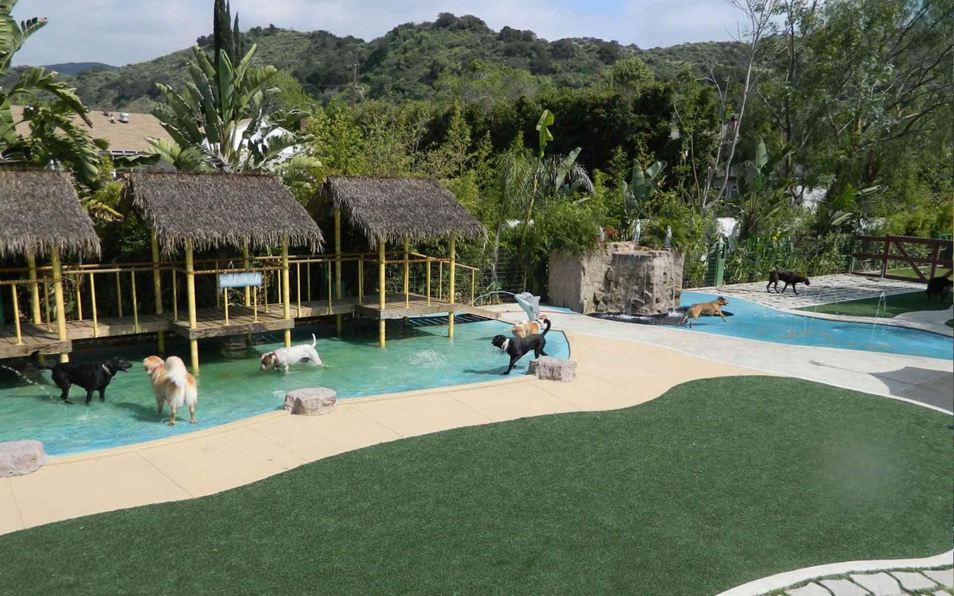 Image result for dog daycare Pet resort, Dog hotel