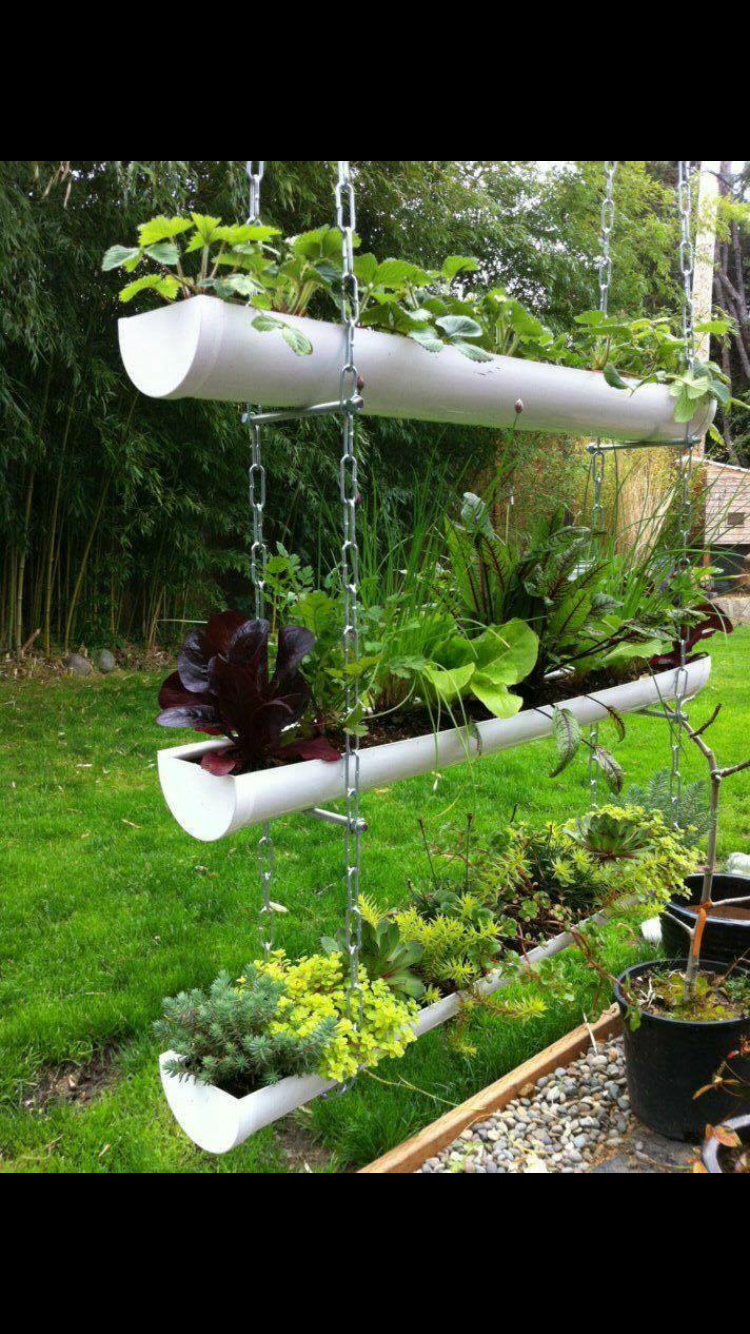 Pin By Elizabeth Sharer On Achitecture And Plants Garden