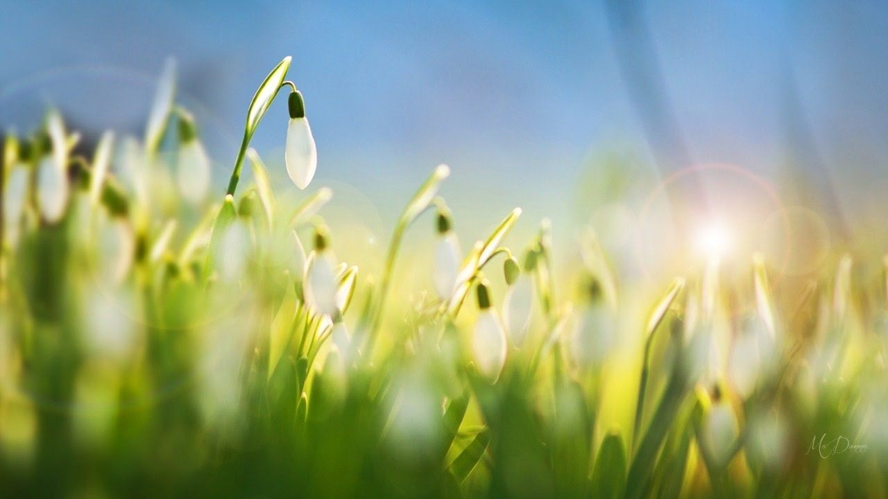 Abraham Hicks The Universe Is Responding To Your Practiced Frequency Flower Wallpaper Good Morning Images Flowers Nature