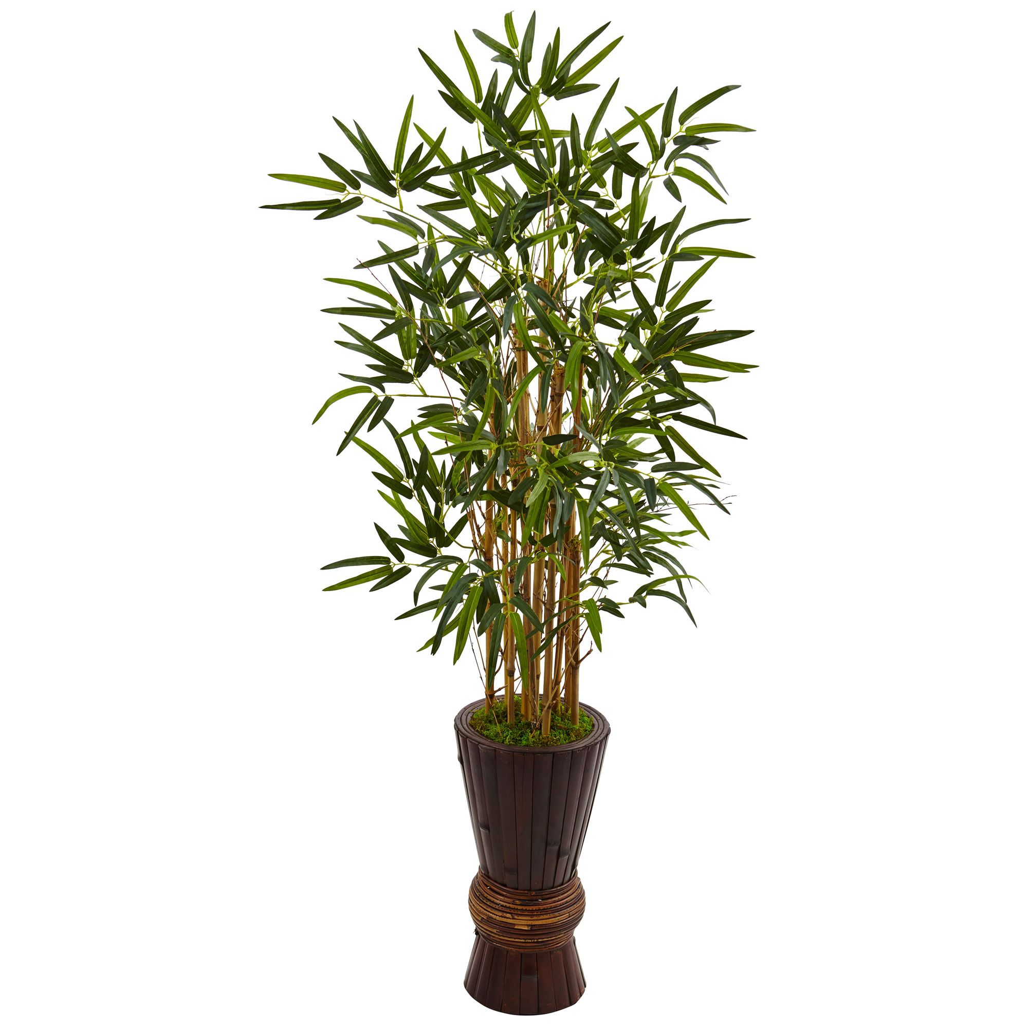 tree pin h and planter palm bamboo raphis in
