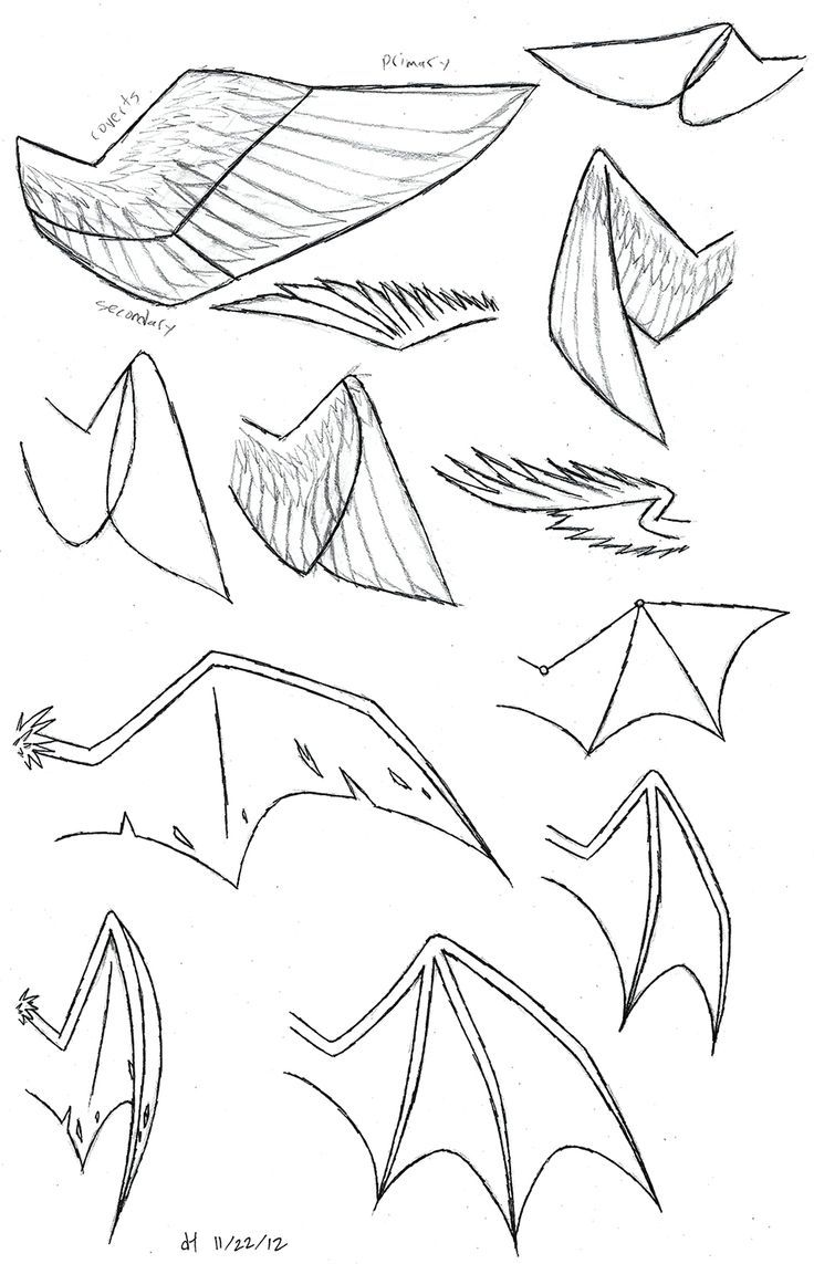 Anime Wolf Ears And Tail : anime, Dragon, Google, Search, Wings, Drawing,, Design, Reference,, Drawing