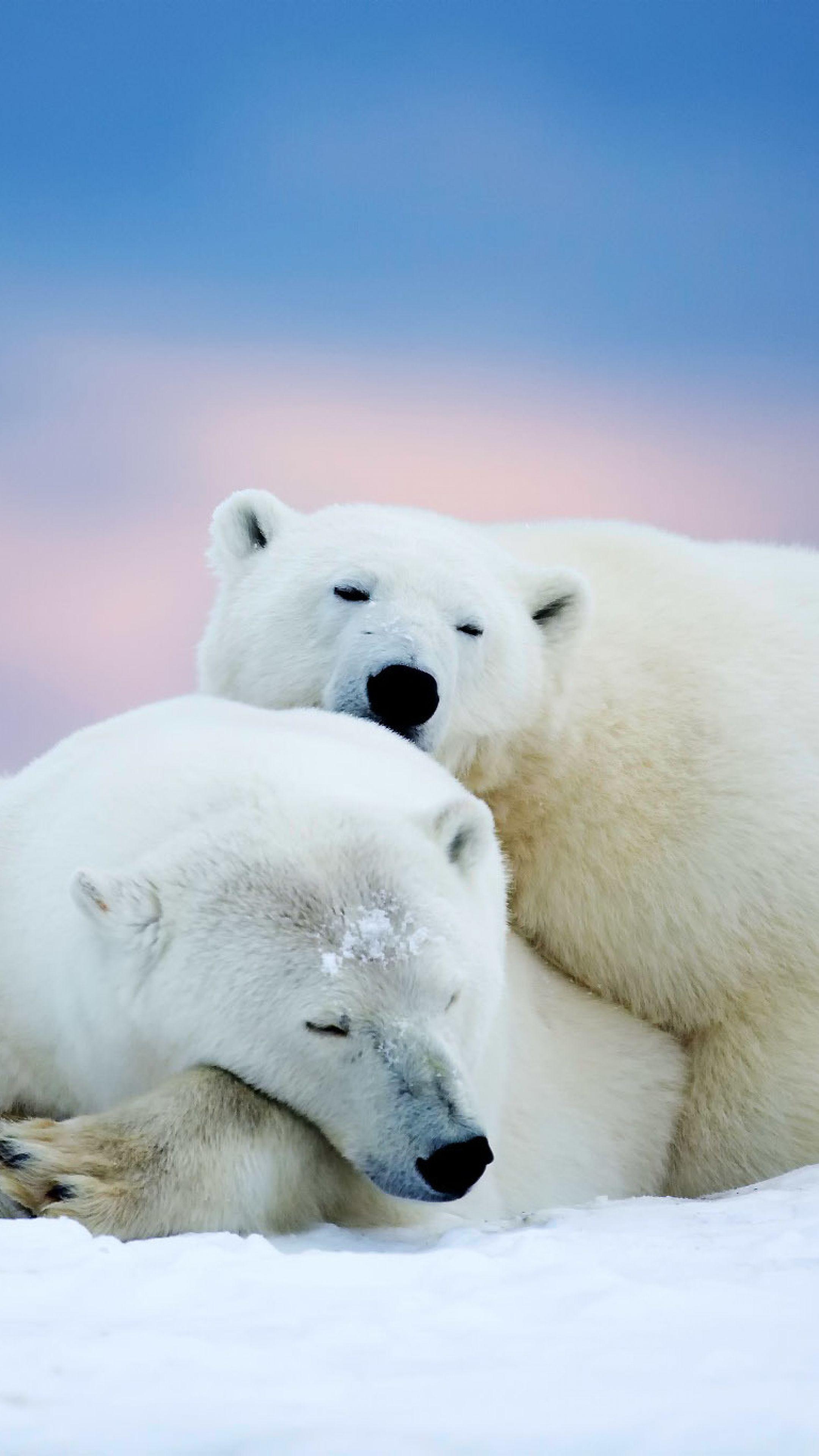 Картинки для телефона белый медведь