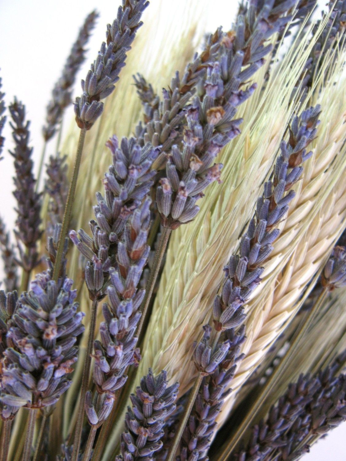 Organic Lavender and Wheat Bouquet by FayeMarie on Etsy