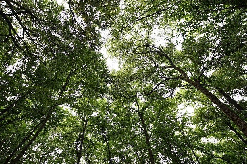 Menakjubkan 30 Gambar Pemandangan Alam Asli Pemandangan Hutan Adalah Asli Langsung Dari Bahan Hd Gambar Download Gambar Pemandanga Di 2020 Pemandangan Hutan Alam