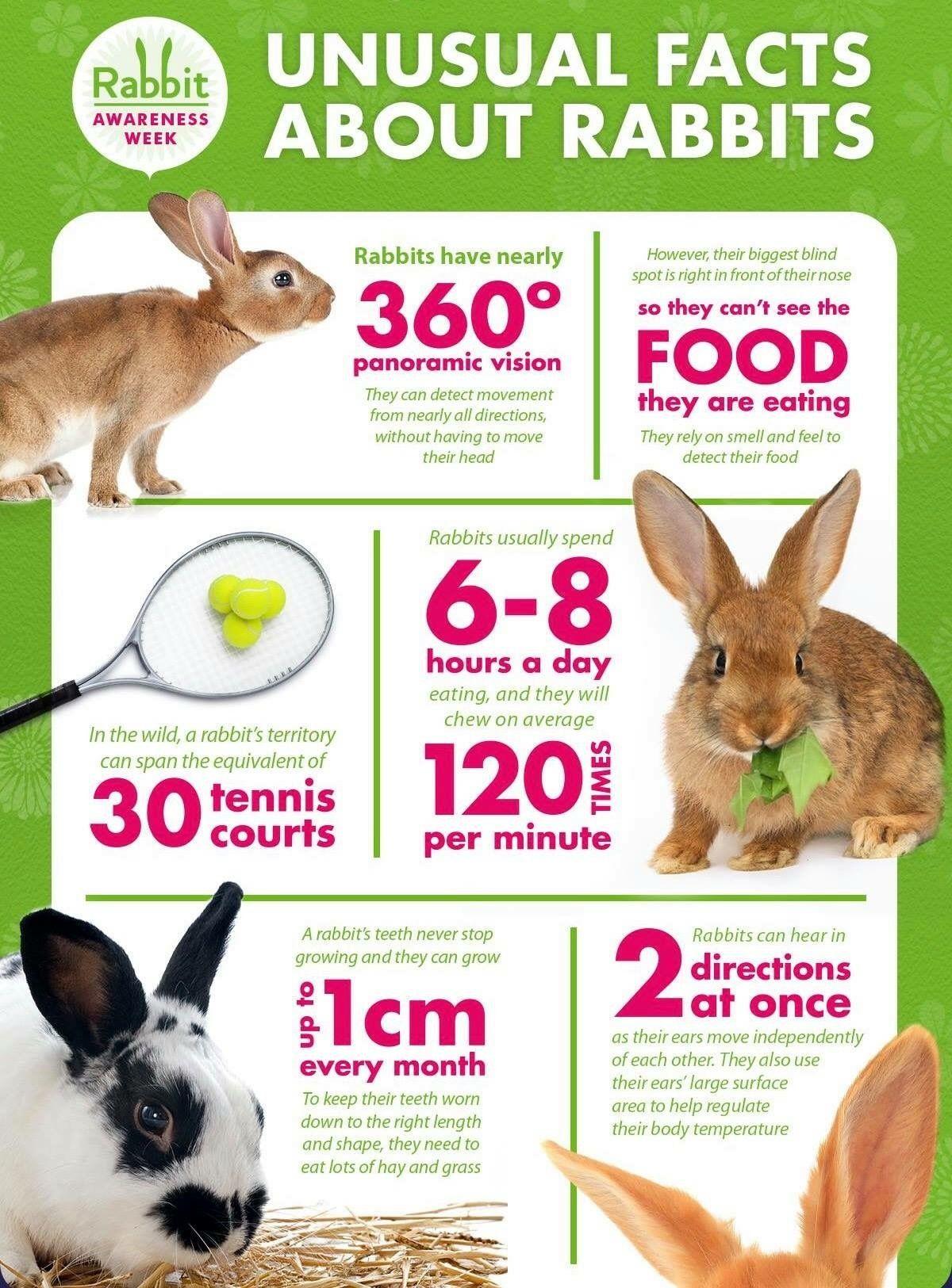 Pin By Alybrooke On Bunnies Rabbit Care Pet Bunny Rabbits Bunny Mom