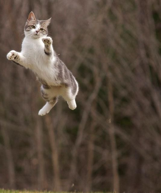 Amusing Shots Of Cats In Ninja Poses Ninja Cats Cat Photography Cats