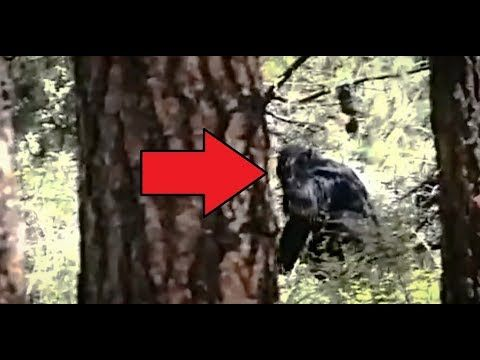 Bigfoot caught on tape 100% Real - YouTube
