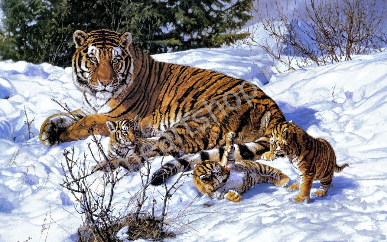 Амурский тигр с тигрятами | Домашние птицы, Дикие животные ...