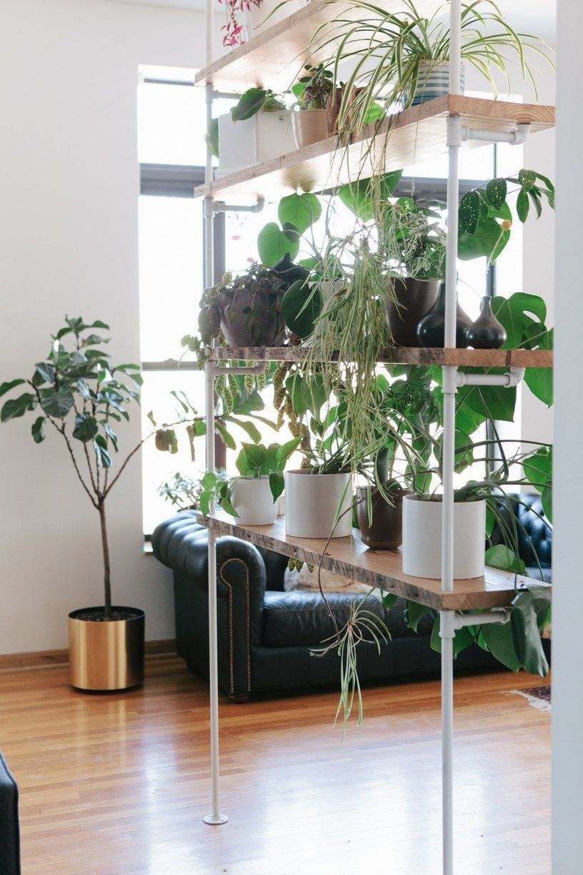 Sam & Linsey's Thoughtful Chicago Home Room with plants